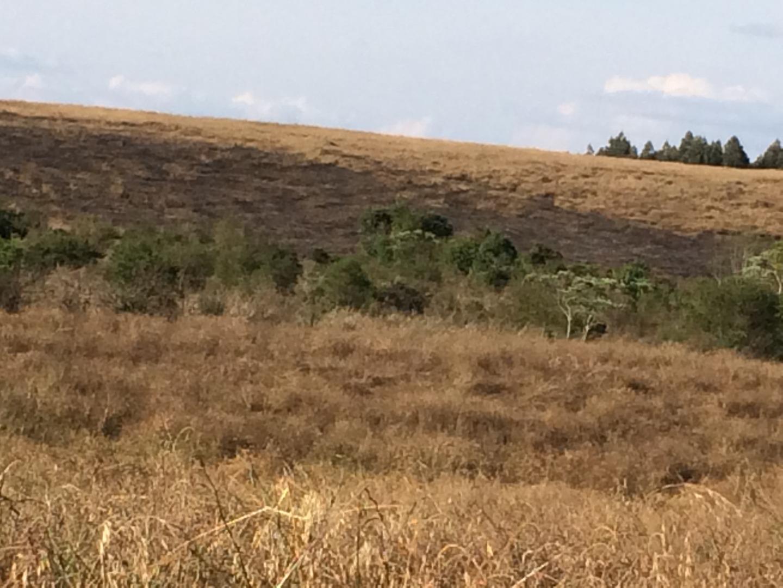 Incêndio em lavoura mobiliza quatro bombeiros em uma hora de trabalho