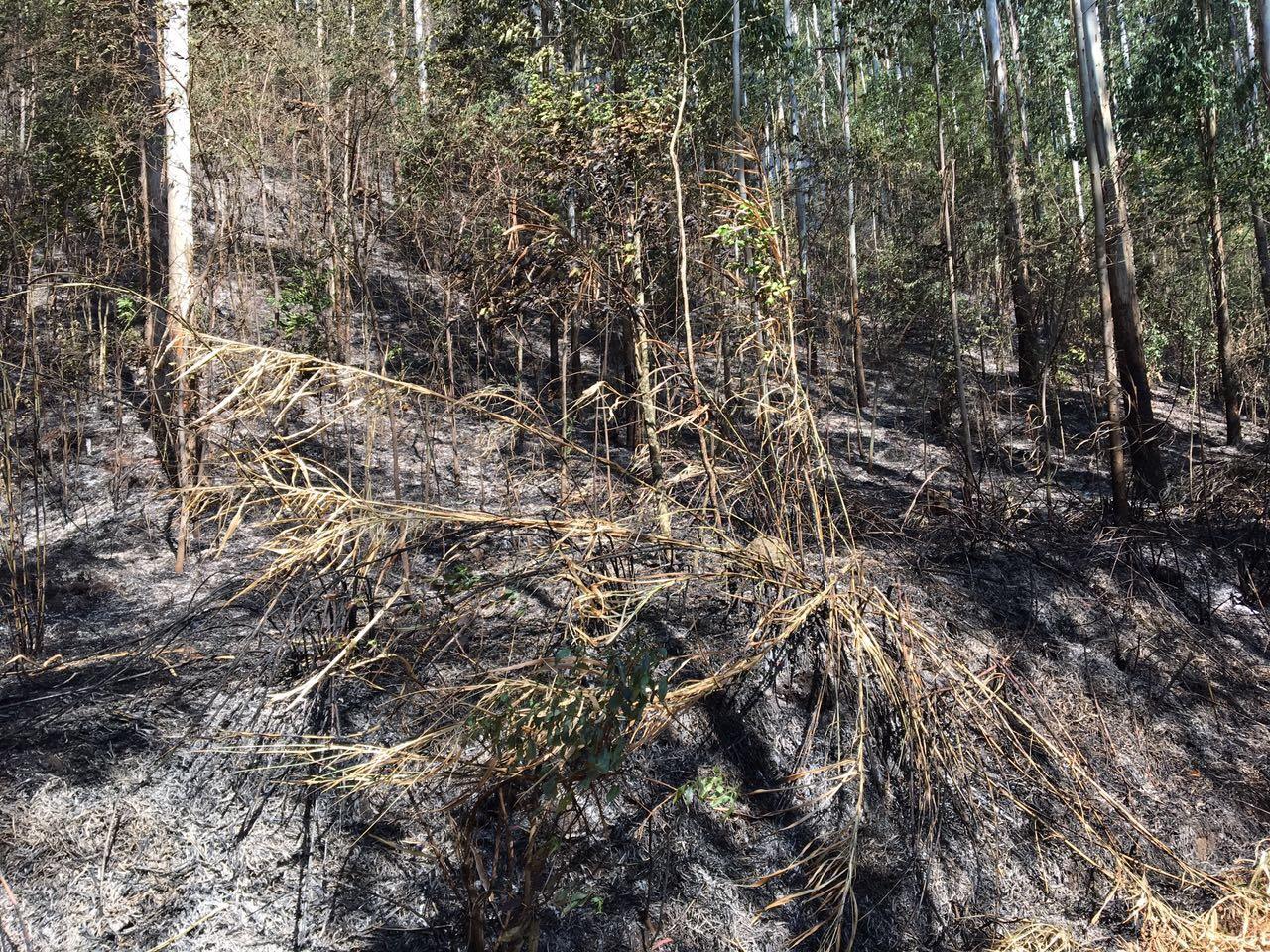 Bombeiros trabalham cerca de 3 horas em incêndio em vegetação
