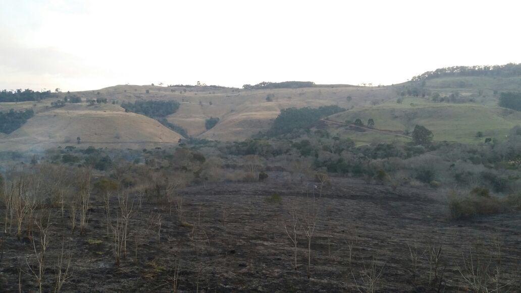 VÍDEO: Incêndio de grande proporção atinge vegetação