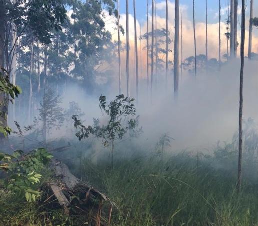 Número de incêndios em vegetação sobe mais de 250% no estado