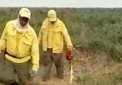 Vídeo de brigadistas colocando fogo em áreas do Pantanal gera polêmica