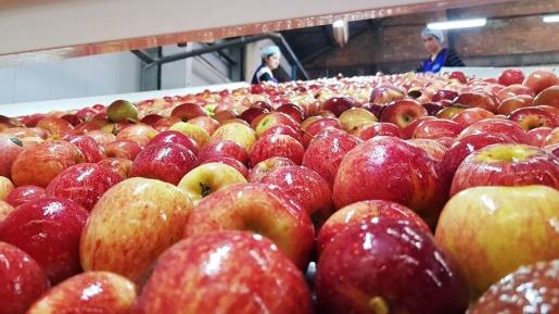 Comer frutas poderia evitar uma em cada sete mortes por doença cardiovascular