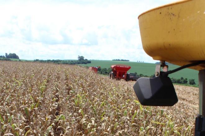 Seca na Argentina afeta safra de milho e preocupa produtores em Santa Catarina