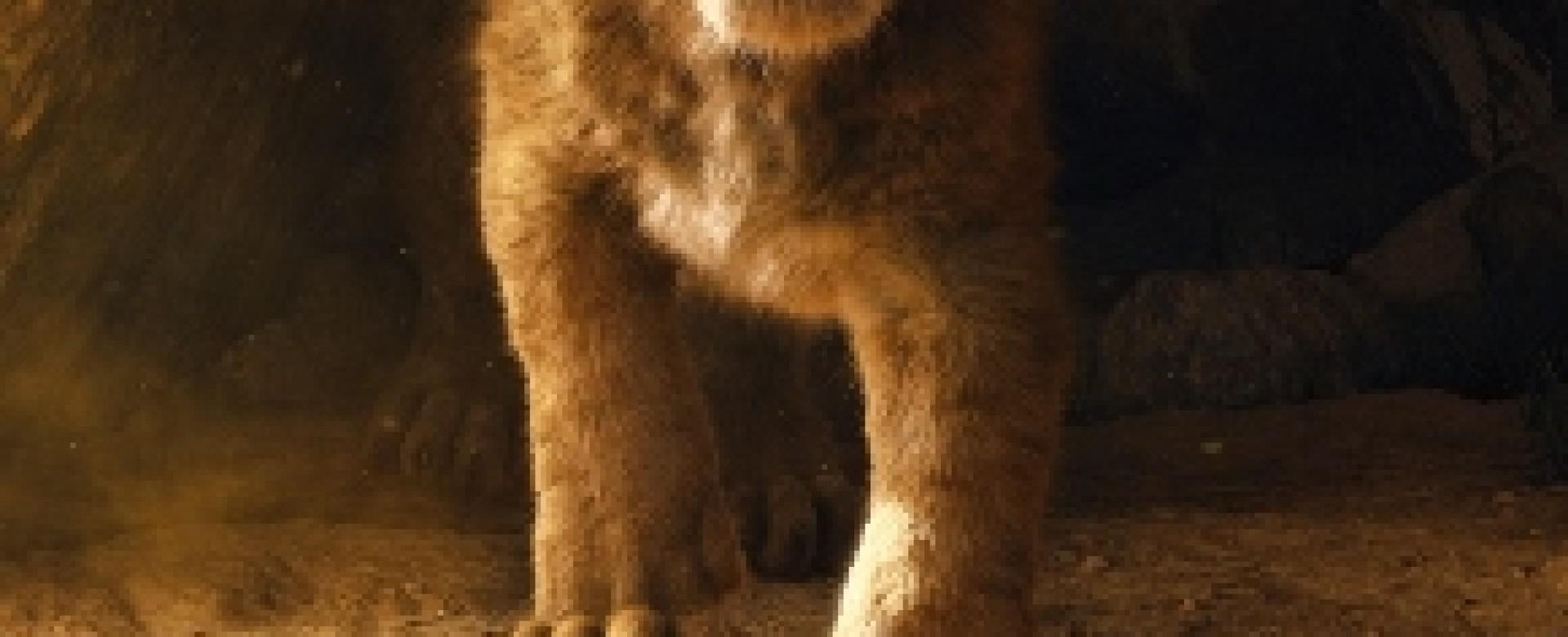 O Rei Leão - 2D