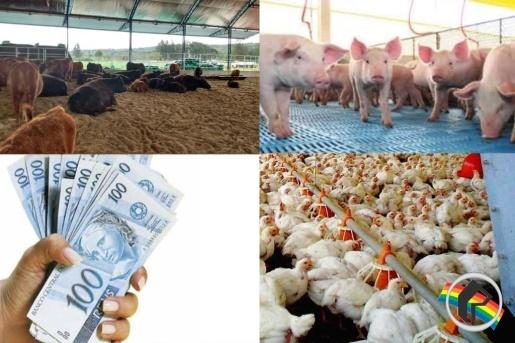 Itapiranga é destaque no movimento agropecuário