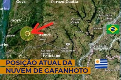 Nuvem de gafanhotos permanece na Argentina e se afasta da fronteira com o Brasil