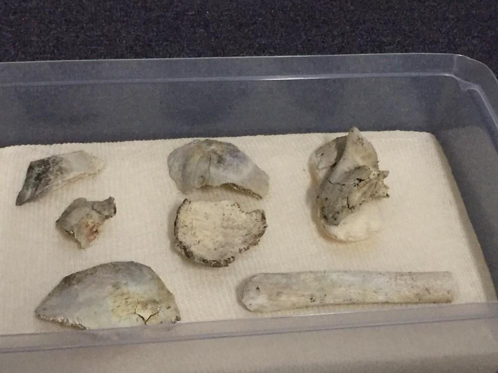 Crânio de Luzia encontrado nos escombros do Museu Nacional