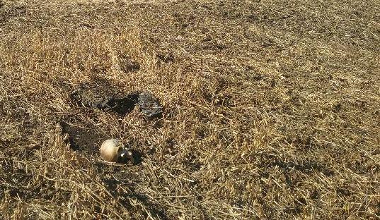 Agricultor encontra ossada humana em propriedade