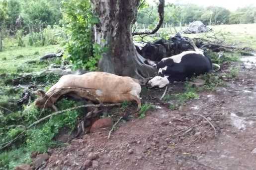 Raios matam gado e atingem casa no interior do RS