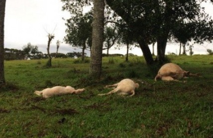 Raio mata animais e produtor tem prejuízo de mais de 40 mil
