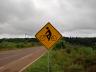 SC 496 recebe sinalização do Deinfra indicando presença de ciclistas