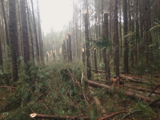 Santa Catarina é atingida pelo segundo tornado em menos de três horas