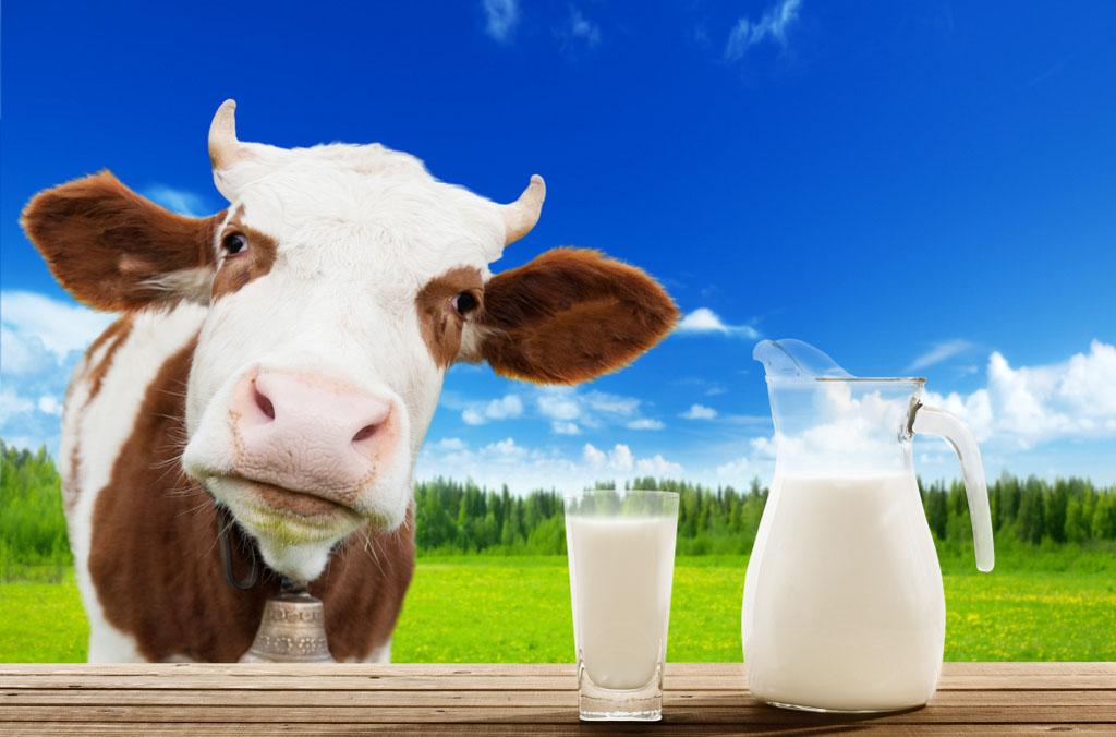 Municípios sentem o reflexo da crise no setor leiteiro
