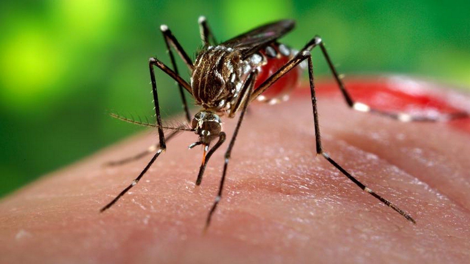 São Miguel do Oeste tem confirmado um caso de Chikungunya