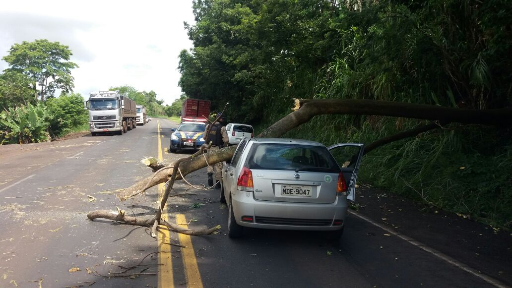 Homem colide veículo em árvore caída na BR-282