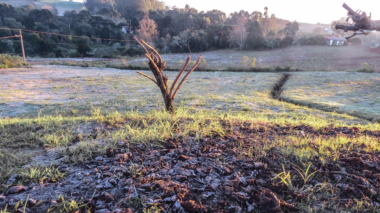 Últimos dias do Outono são marcados pelo sol e temperaturas baixas