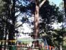 Árvores com risco de queda são cortadas pela prefeitura