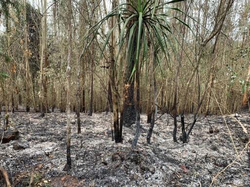 VÍDEO: Incêndio atinge plantação de eucaliptos no interior de Descanso