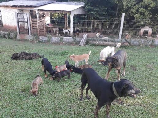 Protetora de animais pede ajuda para manter cães retirados da rua