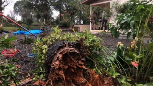 Idosa morre atingida por araucária em Chapecó