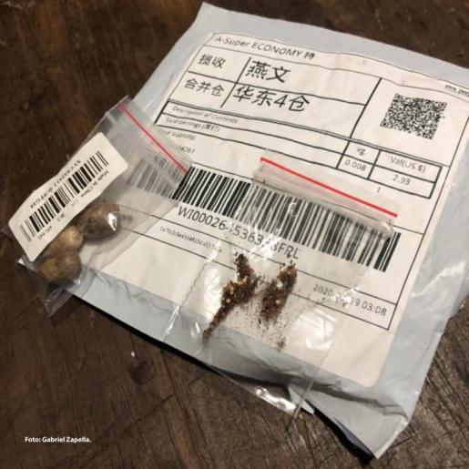 Cidasc emite alerta sobre o recebimento de pacotes de sementes da China